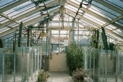 Best winter house plants for your conservatory